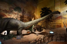 dinosaur park