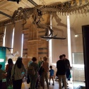 Dinosaur Section @ Natural History Museum