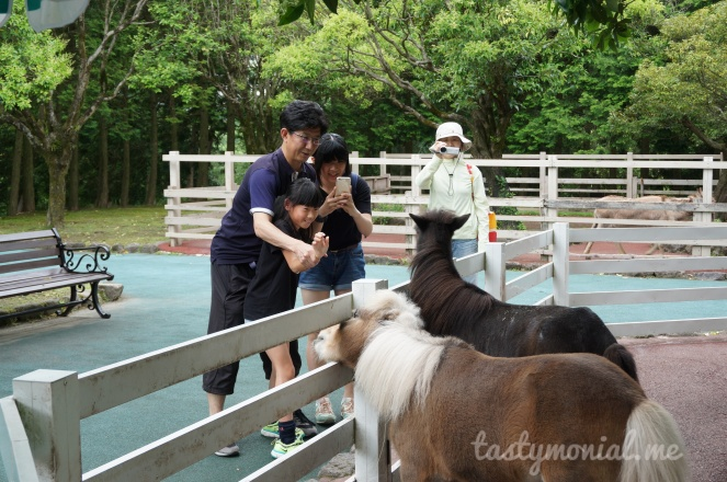 A family was feeding a pony at safari beppu