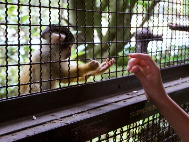 Feeding Squirrel Monkey