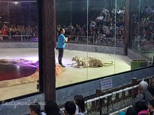 Tiger Show Night Safari Chiang Mai