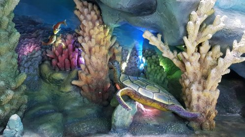 Turtle sculpture inside Sea World Room