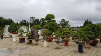 Bonsai area Flower Park Da Lat
