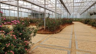 Rose Garden in Flower Park Da Lat