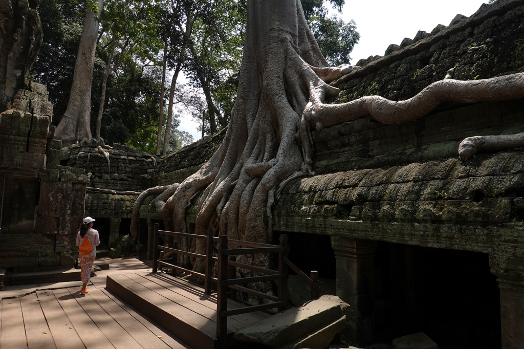 Ta Prohm Giant Tree Angkor Cambodia